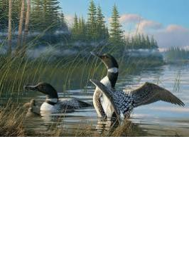 COMMON LOONS 1000 PC JIGSAW PUZZLE