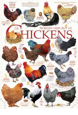 CHICKEN QUOTES 1000 PC JIGSAW PUZZLE